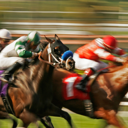 Horse Racing Brighton