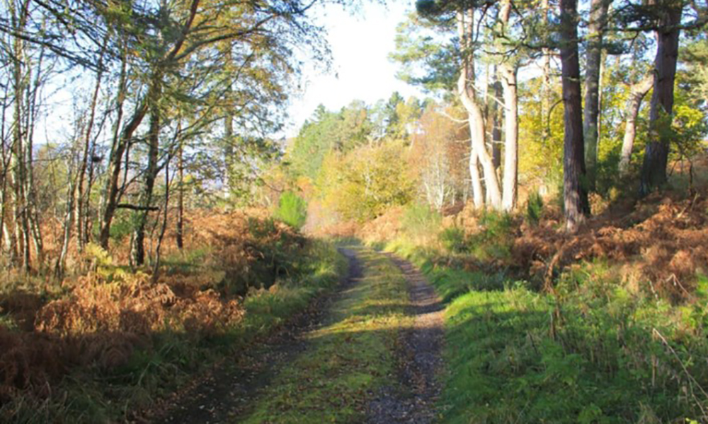 Aultanagar Hunting Lodge Scotland